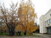 jesieni popołudniowy przespacerowanie wzdłuż miasto ulicznego widoku drzewa z żółtym ulistnieniem fotografia stock