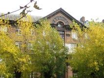 jesieni popołudniowy przespacerowanie wzdłuż miasto ulicznego widoku drzewa z żółtym ulistnieniem obraz royalty free