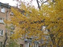 jesieni popołudniowy przespacerowanie wzdłuż miasto ulicznego widoku drzewa z żółtym ulistnieniem obrazy royalty free