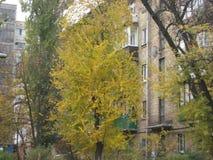 jesieni popołudniowy przespacerowanie wzdłuż miasto ulicznego widoku drzewa z żółtym ulistnieniem obraz stock