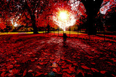 Jesieni popołudnie w Londyn Obraz Stock
