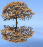 Jesieni powódź fotografia royalty free