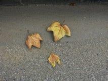 Jesieni prełudium Zdjęcie Royalty Free