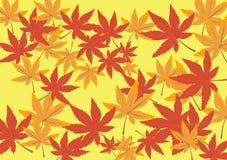 jesieni projekt Obrazy Royalty Free