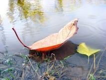 Jesieni prześcieradło Obraz Royalty Free