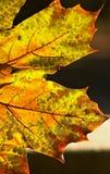jesienią przemiany Fotografia Royalty Free