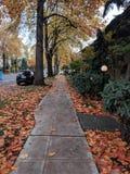 Jesieni przespacerowanie obrazy stock