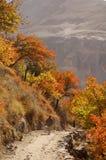 Jesieni przespacerowanie Zdjęcie Royalty Free