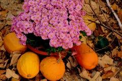 Jesieni purpury Zdjęcie Royalty Free