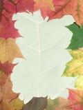jesienią rama Fotografia Stock