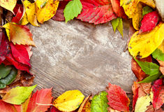 Jesieni rama Fotografia Stock