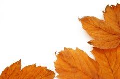 jesienią rama zdjęcia stock