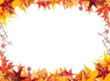 Jesieni rama liście klonowi na Białym tle Obraz Stock