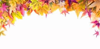 Jesieni rama liście klonowi przy Białym tłem Obraz Stock