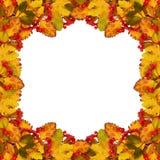 Jesieni rama od suchych barwionych liści i rowan jagod Fotografia Royalty Free