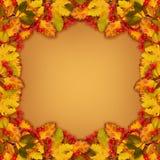 Jesieni rama od suchych barwionych liści i rowan jagod Zdjęcia Stock