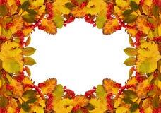 Jesieni rama od suchych barwionych liści i rowan jagod Obraz Royalty Free
