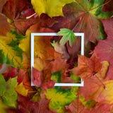 Jesieni rama robić liście z biel ramą Mieszkanie nieatutowy, odgórny widok Zdjęcia Royalty Free