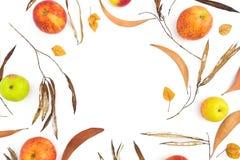 Jesieni rama z spadkiem opuszcza na białym tle, jabłczane owoc Mieszkanie nieatutowy, odgórny widok Dziękczynienie dnia wakacje obrazy royalty free