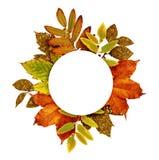Jesieni rama z suchymi i złocistymi błyskotliwość liśćmi Zdjęcie Royalty Free