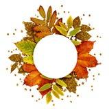 Jesieni rama z suchymi i złocistymi błyskotliwość liśćmi Obraz Stock
