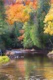 jesienią refleksje drzewo Obraz Stock