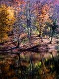 Jesieni reflexion kolorowy mglisty krajobraz obraz stock