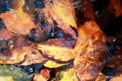 Jesieni rill przepływ Natury siklawa - wizerunku tło fotografia stock