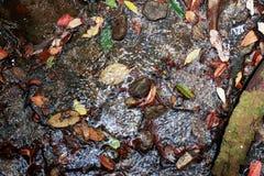 Jesieni rill przepływ Natury siklawa - wizerunku tło zdjęcie royalty free