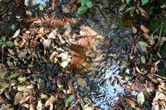 Jesieni rill przepływ Natury siklawa - wizerunku tło zdjęcia royalty free