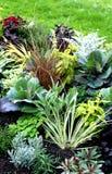 Jesieni rośliny w świeżym łóżku zdjęcia stock