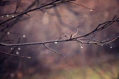 Jesieni rośliny z kroplami woda po Listopadu marznięcia r Zdjęcie Royalty Free