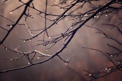 Jesieni rośliny z kroplami woda po Listopadu marznięcia r Zdjęcia Stock