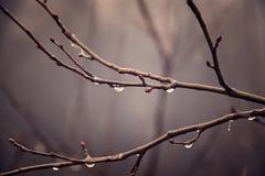Jesieni rośliny z kroplami woda po Listopadu marznięcia r Obrazy Royalty Free