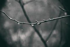 Jesieni rośliny z kroplami woda po Listopadu marznięcia r Zdjęcia Royalty Free