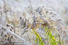 Jesieni rośliny z hoar Obrazy Stock