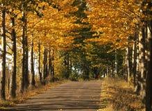 jesienią road Fotografia Royalty Free