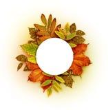 Jesieni round rama z suchymi i złocistymi błyskotliwość liśćmi Obraz Stock