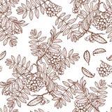 Jesieni rowanberry liście i seads bezszwowy wzór Zdjęcie Stock
