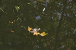 Jesieni rzeka Fotografia Royalty Free