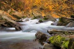 Jesieni rzeka Obrazy Stock