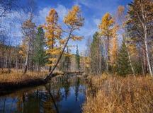 Jesieni rzeka Olha Obrazy Stock