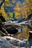 Jesieni rzeka w drewnach Zdjęcia Stock