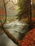 Jesieni rzeka w lesie Bended drzewa above - poziom wody Obraz Stock