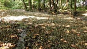 Jesieni rzeka w naturze zbiory wideo