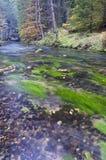 Jesieni rzeka z drzewami Obrazy Royalty Free