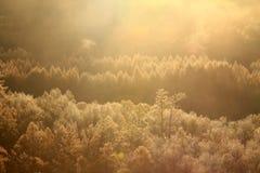 Jesieni rzeki drzewo Obrazy Stock