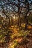 Jesieni słońca promienie Fotografia Stock
