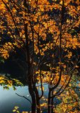 Jesieni słońca skąpanie obrazy royalty free