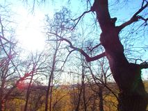 Jesieni słońce przez nagich gałąź drzewa Obrazy Royalty Free